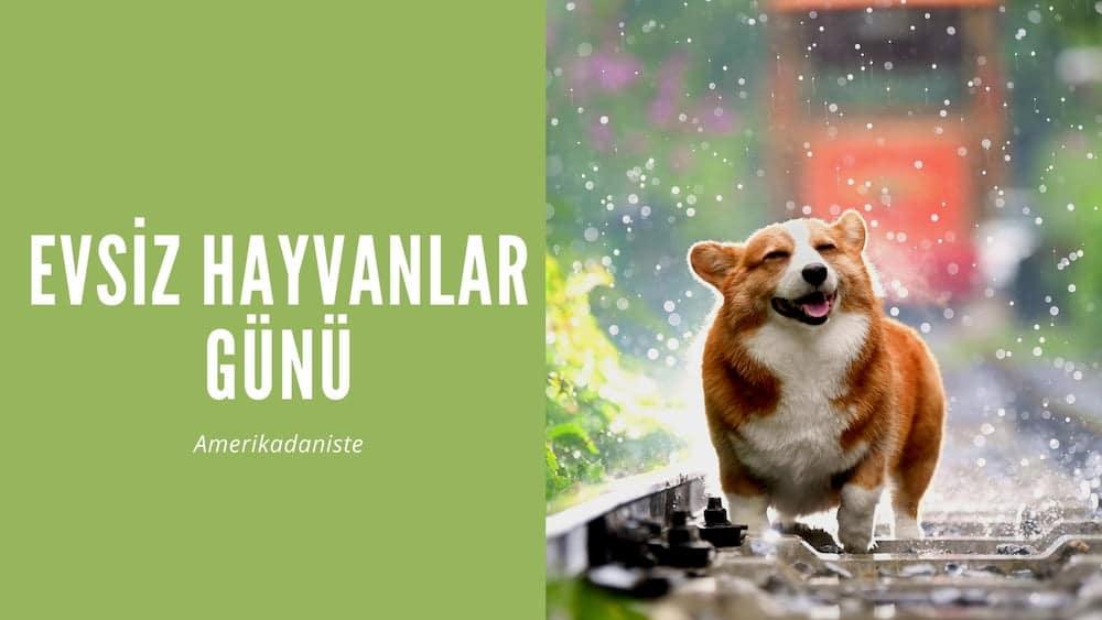 Evsiz Hayvanlar Günü'nde Sokak Hayvanlarına Yuva Olun